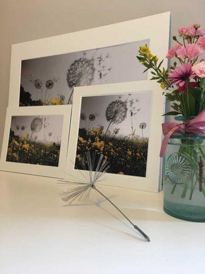 10X10 Print Dandelions Greyscale