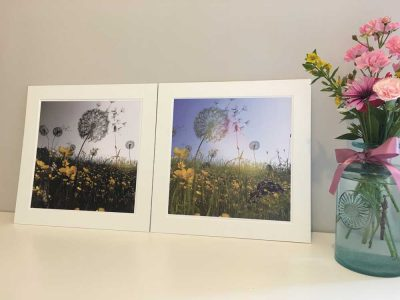 10x10 Print Dandelions Colour