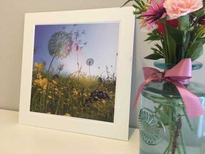 10x10 Print Dandelions Colour