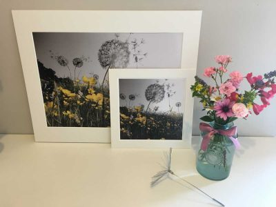 A3 Print Dandelions Greyscale