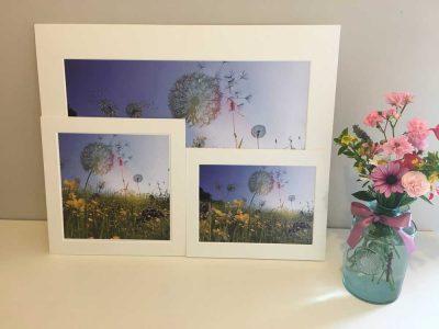 A3 Print Dandelions