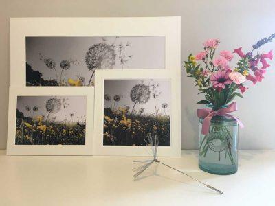 A5 Print Dandelions Greyscale