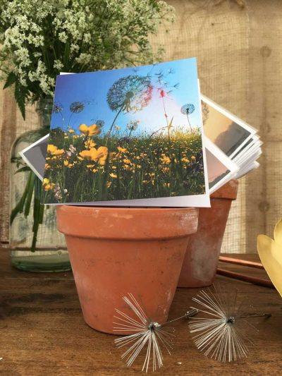 Dandelions 2 Greetings Card
