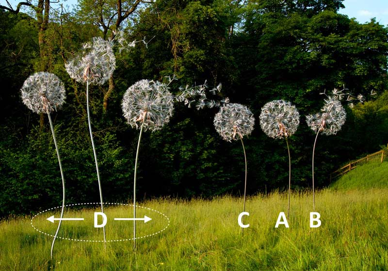 Dandelion cluster options
