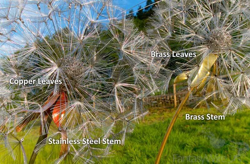 Dandelion options